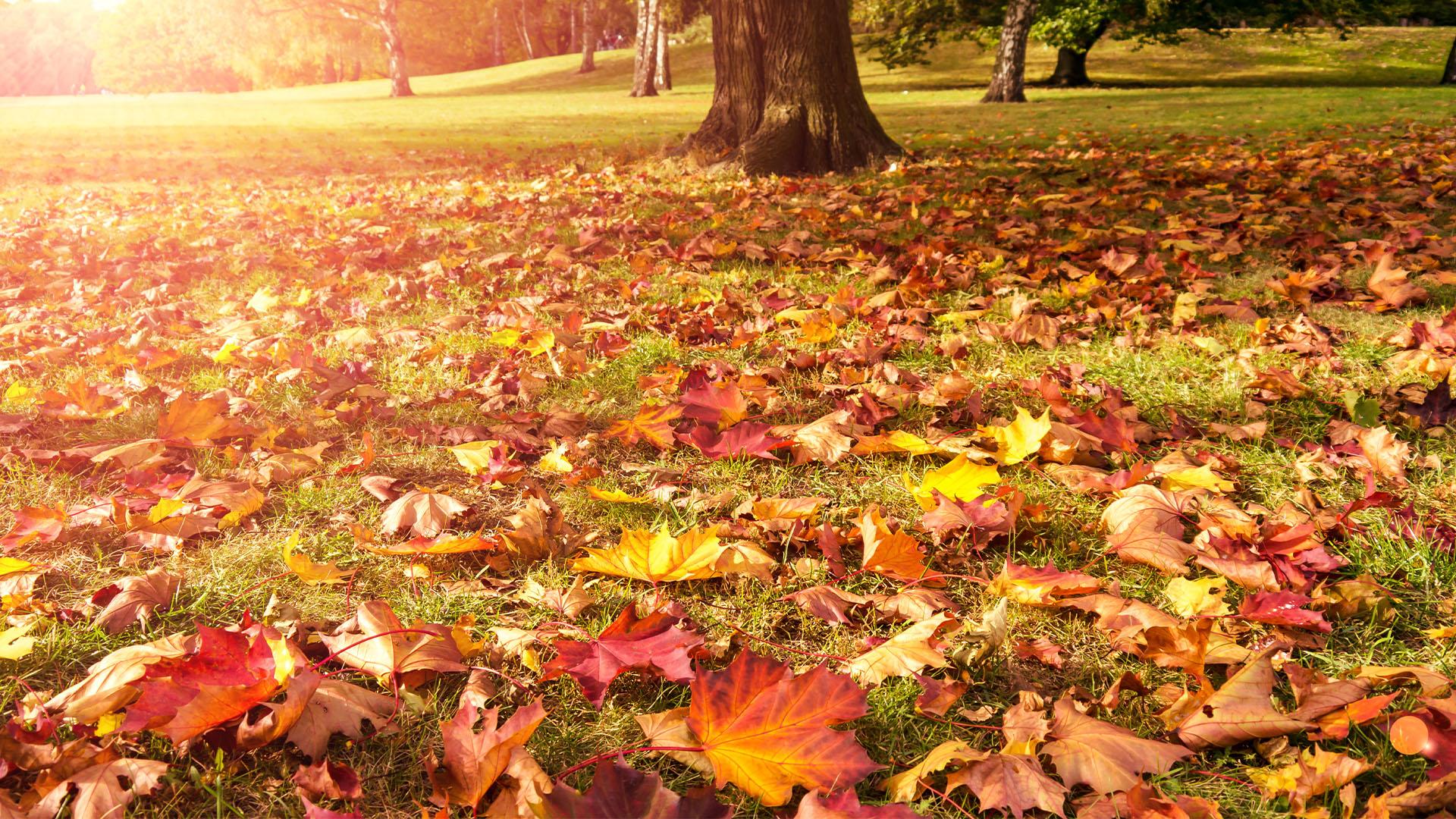 Autumun Leaves