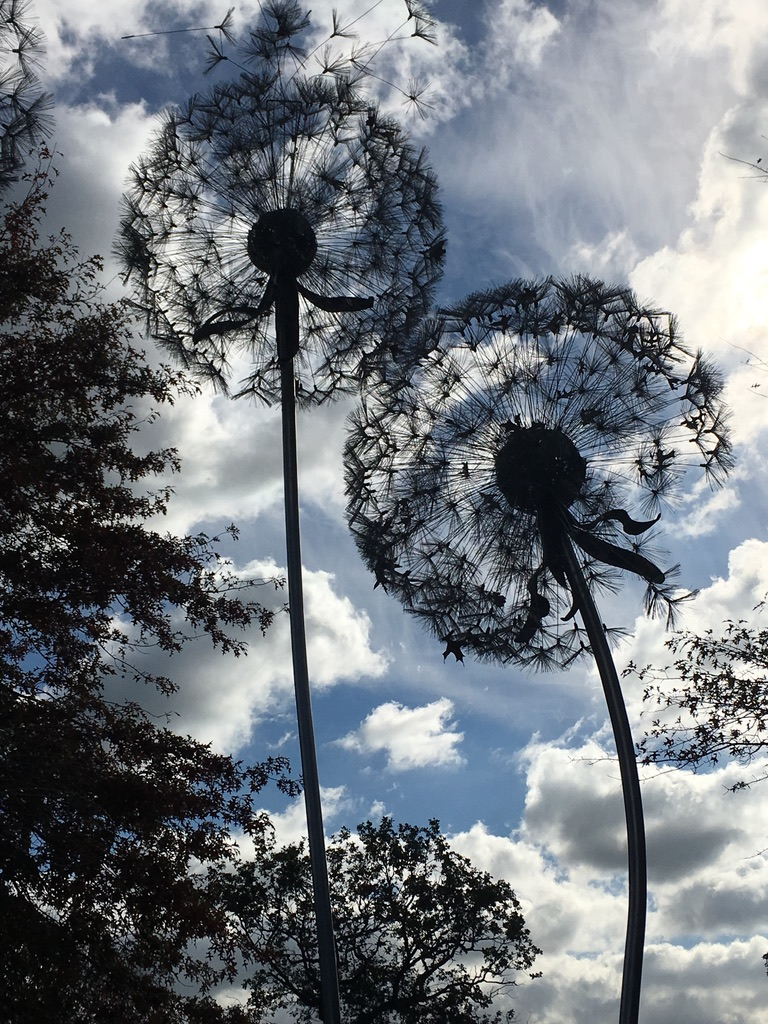 Two aliums in the wind